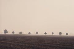 Trees i en rad på fältet Royaltyfria Bilder