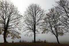 Trees i höst Arkivbild