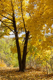 Trees i höst Arkivbilder