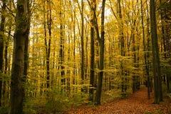 Trees i höst Fotografering för Bildbyråer
