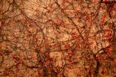 Trees i höst Arkivfoton