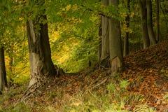 Trees i höst Royaltyfri Fotografi