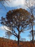 Trees i höst arkivfoto