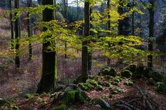 Trees i höstskogen Arkivfoto