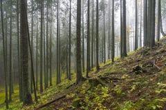 Trees i mist Fotografering för Bildbyråer