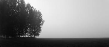 Trees i misten Arkivfoto