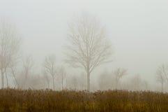 Trees i misten Arkivbilder
