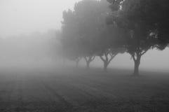 Trees i misten Arkivfoton