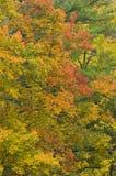 Trees i nedgång färgar Arkivfoto