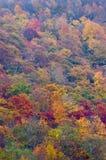 Trees i nedgång färgar Royaltyfri Fotografi