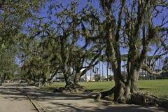 Trees i parken - São José DOS Campos - Brasilien arkivfoton