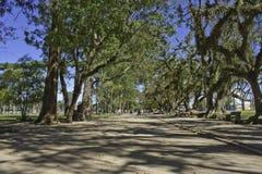 Trees i parken - São José DOS Campos - Brasilien arkivfoto