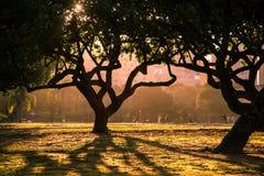 Trees i parkera Royaltyfria Bilder