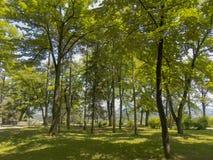 Trees i parkera Fotografering för Bildbyråer