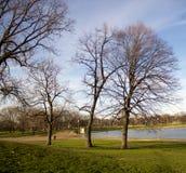 Trees i parkera Arkivbilder