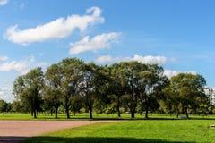 Trees i parkera Royaltyfri Foto