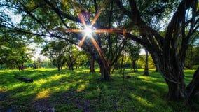 Trees i parkera Solens strålar till och med träd Royaltyfri Fotografi