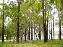 Trees i skog Royaltyfri Foto