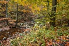 Trees i skogen Fotografering för Bildbyråer