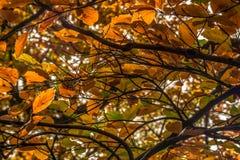 Trees i skogen Royaltyfri Foto