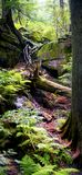 Trees i skogen arkivbilder