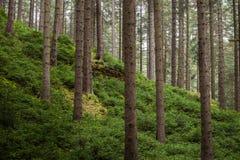 Trees i skogen arkivbild