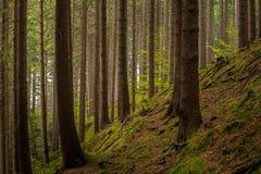 Trees i skogen arkivfoto