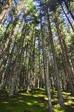Trees i skogen Royaltyfria Bilder