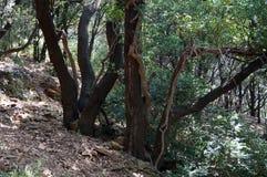Trees i skogen Royaltyfria Foton