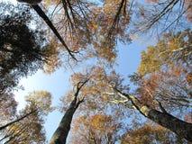 Trees i skogen Royaltyfri Fotografi