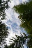Trees i skyen royaltyfria bilder