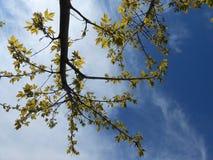 Trees i skyen Royaltyfria Foton