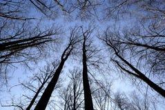 Trees i skyen Arkivfoto