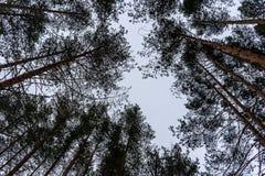 Trees i skyen arkivfoton
