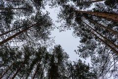 Trees i skyen arkivbilder