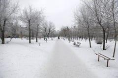 Trees i snow Fotografering för Bildbyråer