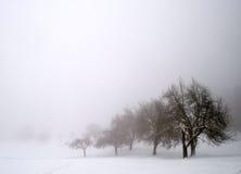 Trees i Snow 库存图片
