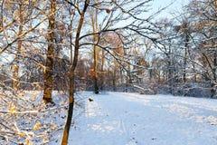 Trees i snowen Royaltyfria Bilder