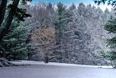 Trees i snowen Royaltyfri Fotografi