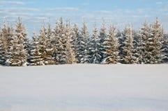 Trees i snowen royaltyfri bild