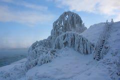Trees i snowen Royaltyfria Foton