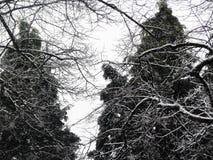 Trees i snowen Royaltyfri Foto