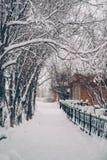 Trees i snowen Arkivbild