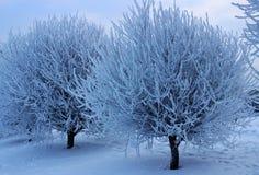 Trees i snowen Arkivbilder