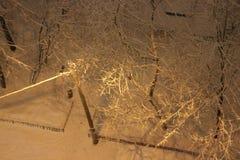 Trees i snowen natt övre sikt Royaltyfri Fotografi