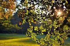 Trees i solljus Arkivbild