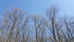 Trees i solljus Arkivfoton