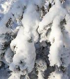 Trees i vinter Royaltyfria Bilder