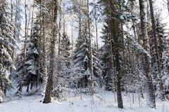 Trees i vinter Arkivbild