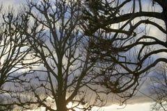 Trees i vinter Fotografering för Bildbyråer